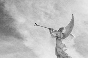 angel_trumpets-350x232