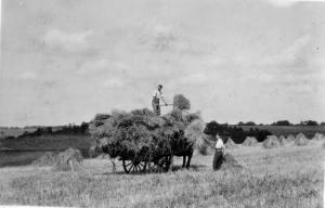 cart sheaves