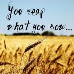 sow reap